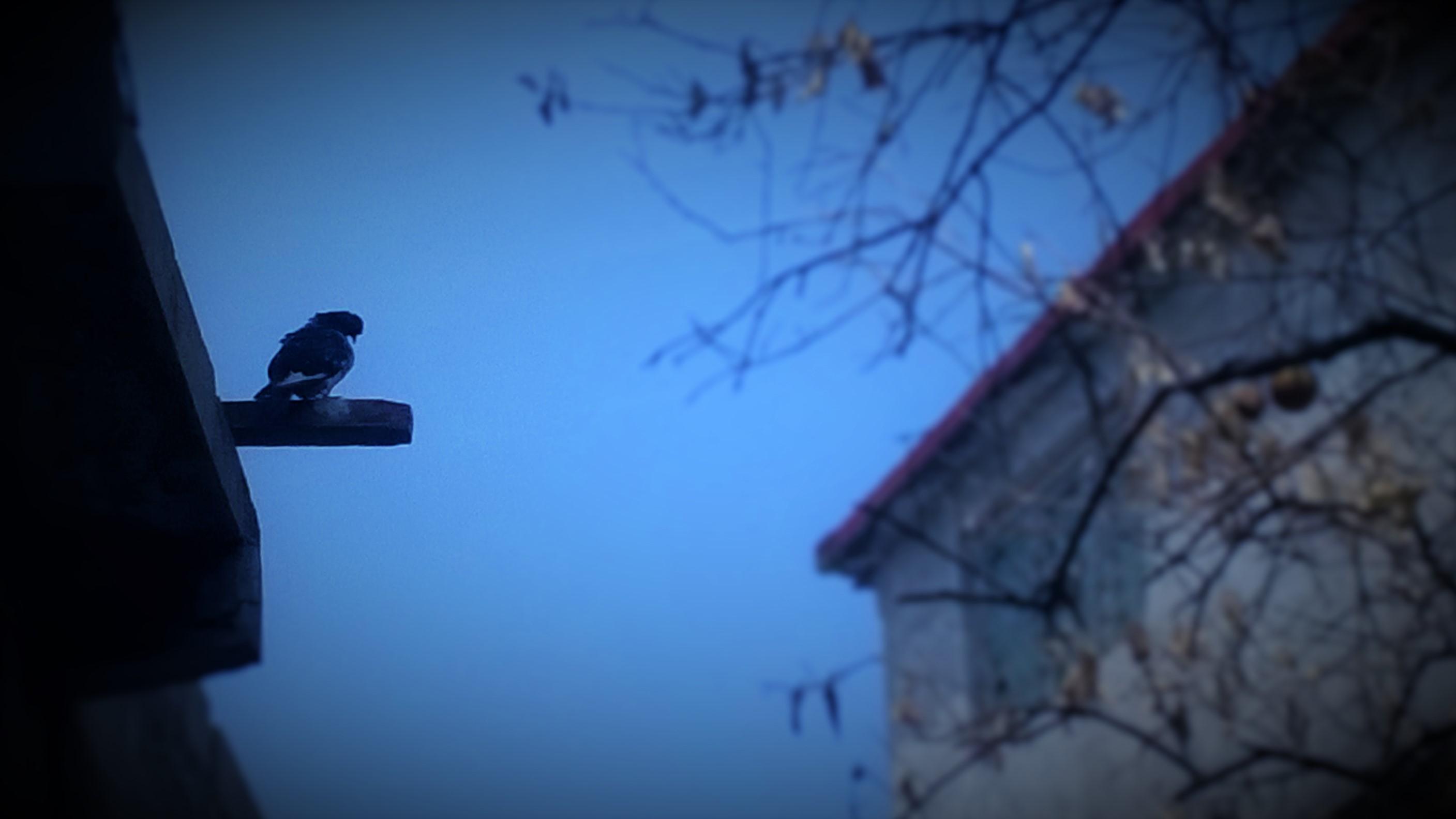 Sendos caminos aventuraban una mano de signo conocido, miradas que el viento llevaba, quedaban lejos. Te atrapa una experiencia dijo la voz ajena, simbólicamente la esperanza se define diferente en cada gente, pero veía una paloma.