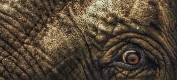 gapfer.com/elefante